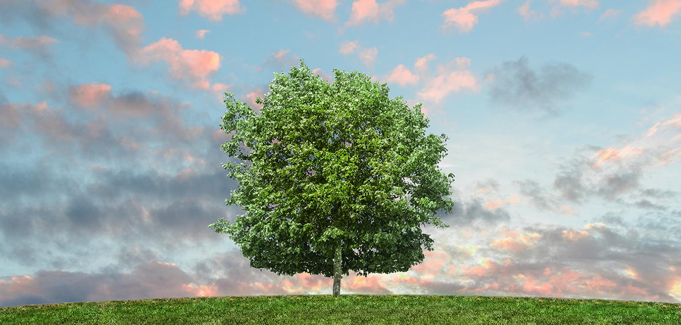 arbre sur une coline